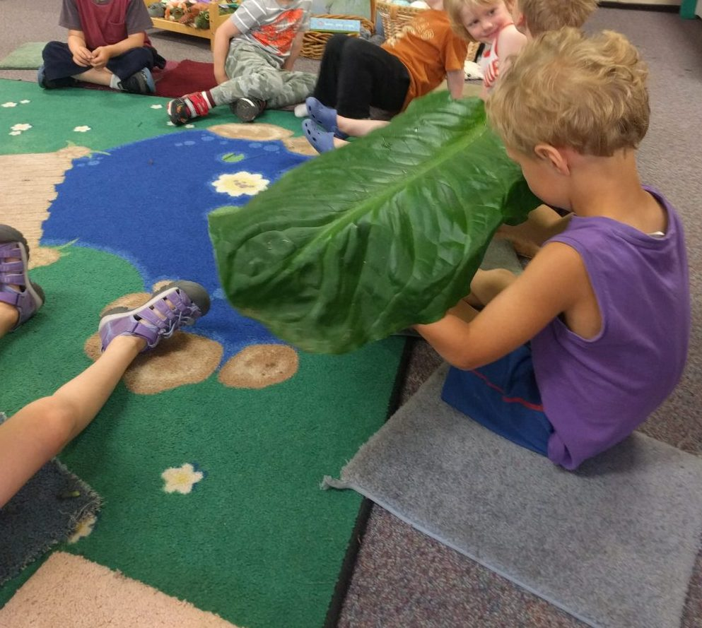 objects like leaves and pelts also have scents worth learning about and make different sounds when touched or stroked.